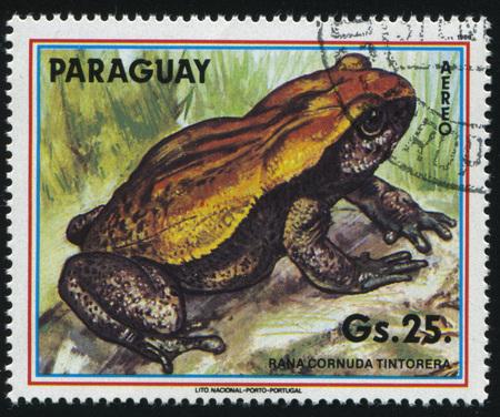 러시아 칼리닌그라드, 1977 년경 Rana Cornuda Tintorera, 파라과이에 의해 인쇄 된 스탬프 2017 년 2 월 22 일 : 스탬프