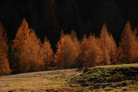 openspace: Autumn with fired colours Stock Photo