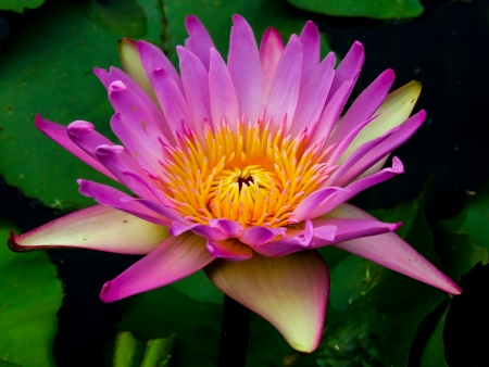 Colorful of lotus photo