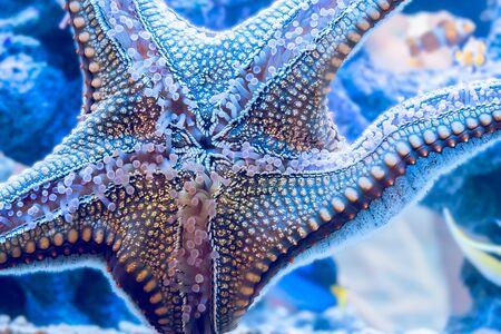fishtank: Starfish is sticking on glass in fishtank. Stock Photo