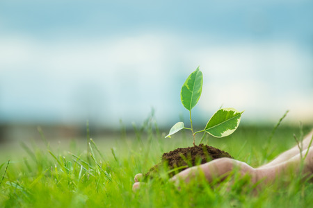 Human is holding a small green plant with soil in its hands over the green grass background