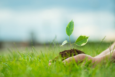 Human is holding a small green plant with soil in it's hands over the green grass background