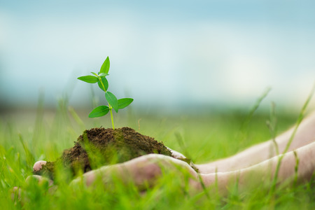 soil conservation: Human is holding a small green plant with soil in its hands over the green grass background
