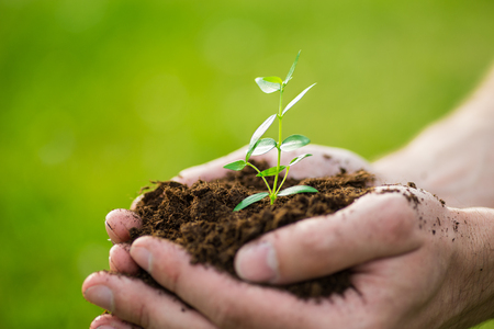 soil pollution: Human is holding a small green plant with soil in its hands over the green grass background