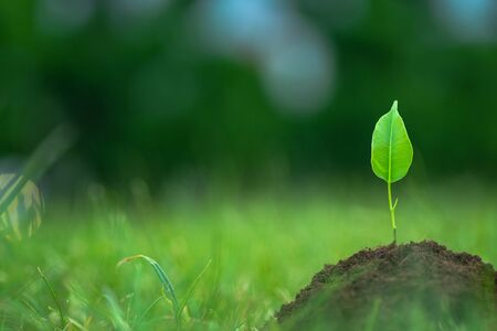 Small green plant starting to grow from the pure eco soil over the green grass background Standard-Bild
