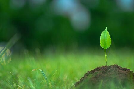 Kleine grüne Pflanze beginnt, von der reinen Öko Boden über das grüne Gras Hintergrund wachsen
