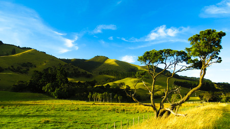 non: New Zealand, Wairarapa, Countryside landscape LANG_EVOIMAGES
