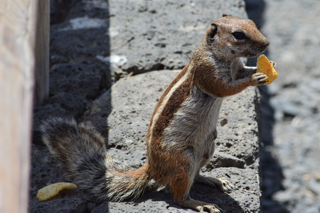 Squirrel eating snack