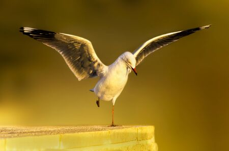 Seagull Landing on wall