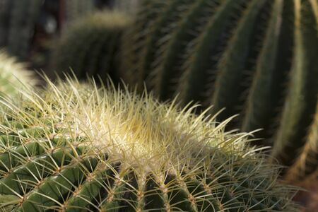 Close up of cactus LANG_EVOIMAGES