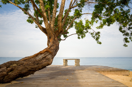 climas: Jamaica, Tree and bench by Caribbean Sea