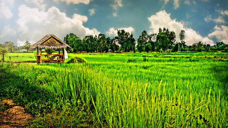 Khon Kaen, Thailand, A  Rural Paddy Field And,Retreat From The Sun LANG_EVOIMAGES