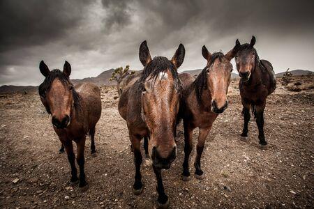 Portrait of herd of horses LANG_EVOIMAGES