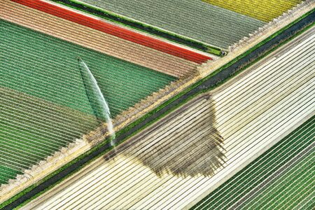 patchwork: Holland, Aerial view of water spraying on tulip fields