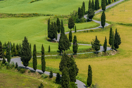Italy, Tuscany, Monticchiello, Small trees along winding road LANG_EVOIMAGES