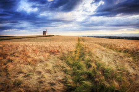UK, England, Warwickshire, Chesterton, Barley Field with windmill  LANG_EVOIMAGES