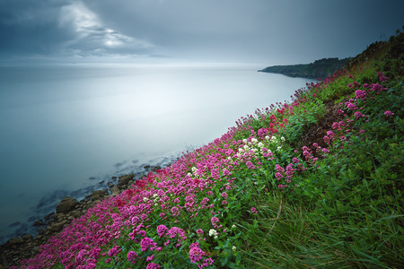 non: Ireland, Dublin, Howth, Blooming Flowers