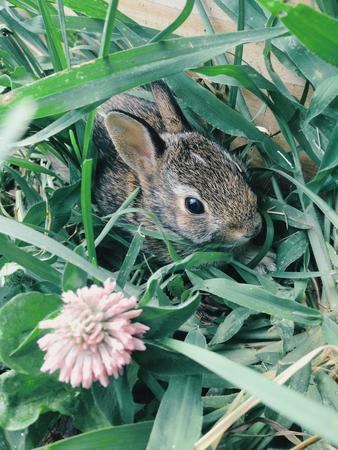 Close-up of young rabbit in grass