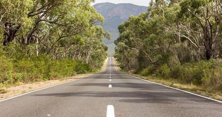 vanishing point: Tree lined empty road, The Grampians, Victoria Australia