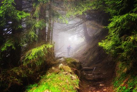 Man hiking in the woods, Appenzeller, Switzerland LANG_EVOIMAGES