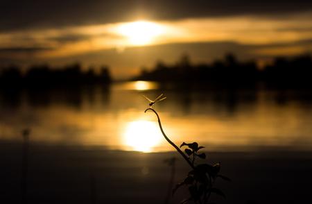 Bangladesh, Sunamgonj, Dragonfly at sunset