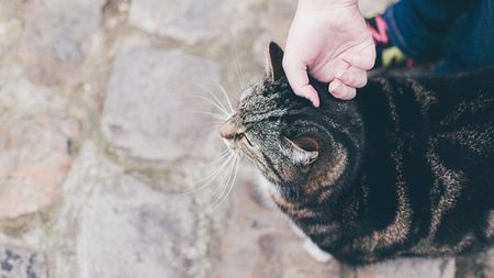 Elevated view of a girl stroking a cat