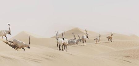 Heard of Oryx crossing desert, Sharjah, UAE LANG_EVOIMAGES