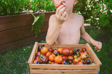 Close-up of a boy eating a freshly picked tomato