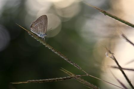 Butterfly on a plant stem, Bekasi, West Java, Indonesia LANG_EVOIMAGES