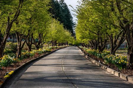 vanishing point: Empty treelined road LANG_EVOIMAGES
