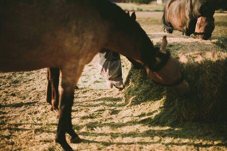 Horses feeding on a farm LANG_EVOIMAGES