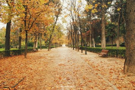 vanishing point: Park del Buen Retiro in autumn, Madrid, Spain LANG_EVOIMAGES