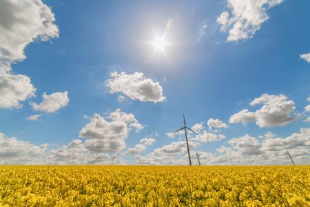 Wind turbine in rapeseed field, Reims, France