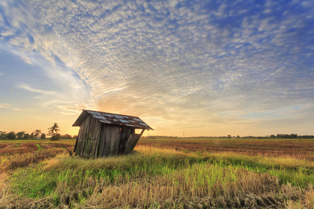 Abandoned wooden shack in paddy rice field at sunrise, Asia