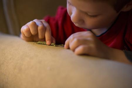 Boy playing with caterpillar pet