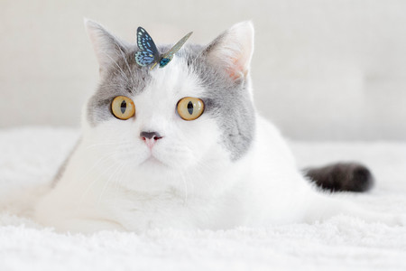 Cat with butterfly  LANG_EVOIMAGES