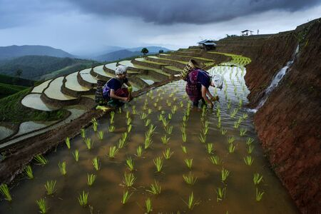 Two Woman working in Terraced rice paddy field, Thailand LANG_EVOIMAGES