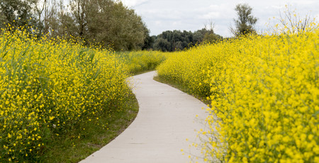 Footpath through Flowers in Oostvaardersplassen, Lelystad, Holland LANG_EVOIMAGES