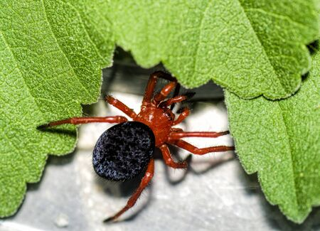 Spider and leaves