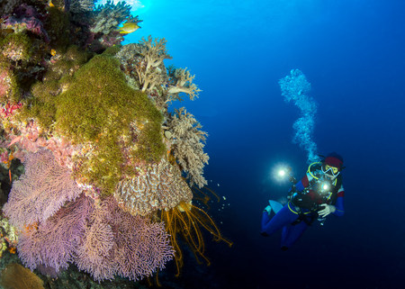 Woman filming coral reef, Tubbataha Reefs Natural Park, Philippines