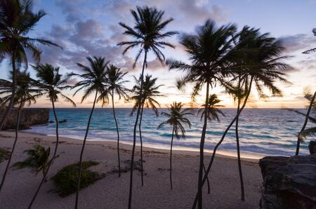 Palm trees on beach at sunrise, Barbados