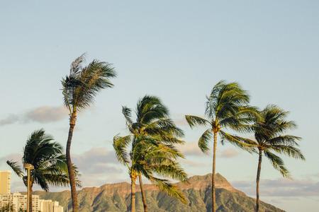 Palm trees and Diamond Head Crater, Waikiki Beach, Hawaii, America, USA