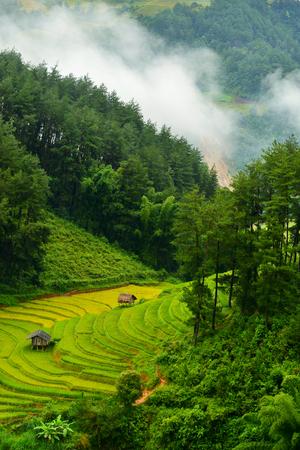 Terraced rice field,Mu Chang Chai,Vietnam LANG_EVOIMAGES