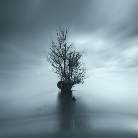 Tree in the middle of a lake,County Antrim,Northern Ireland,UK