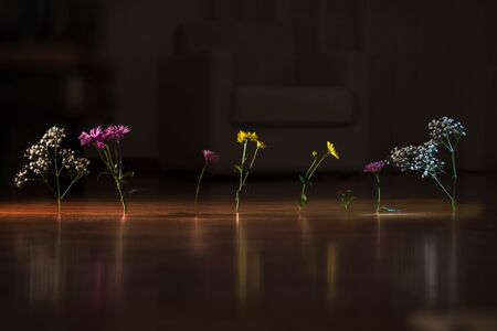 Flowers on the floor LANG_EVOIMAGES