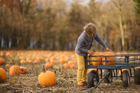 Boy in a pumpkin patch loading pumpkins into a wagon