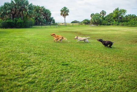 Three dogs running in a park, Fort de Soto, Florida, America, USA LANG_EVOIMAGES
