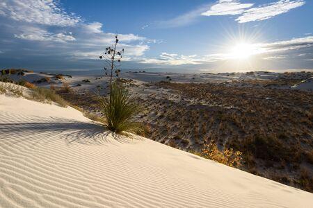 Desert landscape, White Sands National Monument, New Mexico, America, USA