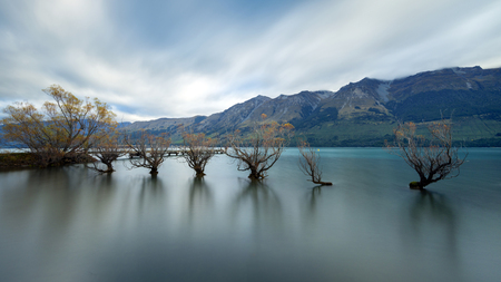 Willow Trees of Glenorchy, Lake Wakatipu, Otago Region, South Island, New Zealand LANG_EVOIMAGES