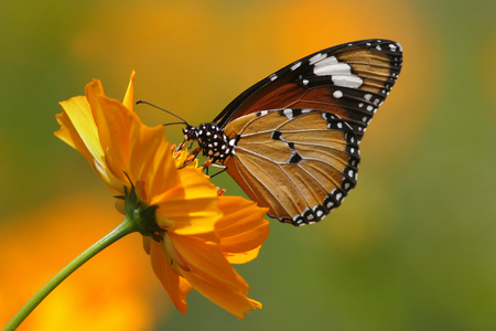 Butterfly on a flower, Indonesia LANG_EVOIMAGES